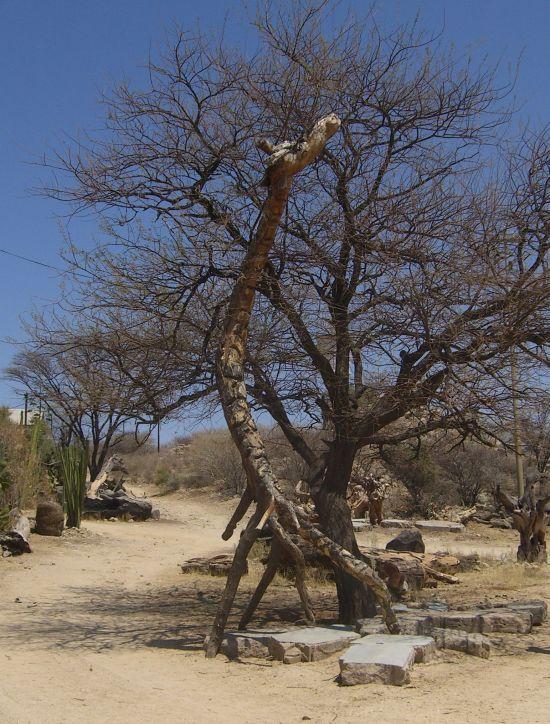 Tikolosh, geschnitztes aus Wurzeln