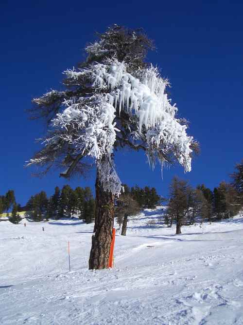 eingefrorener Baum